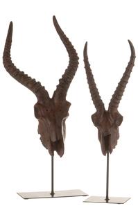 Schedel Antilope