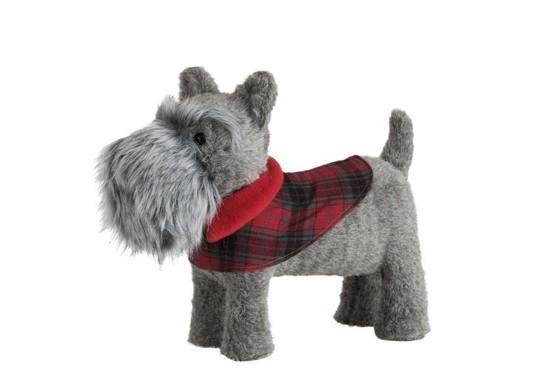 Hond Terrier