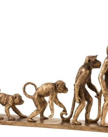 Aap evolutie